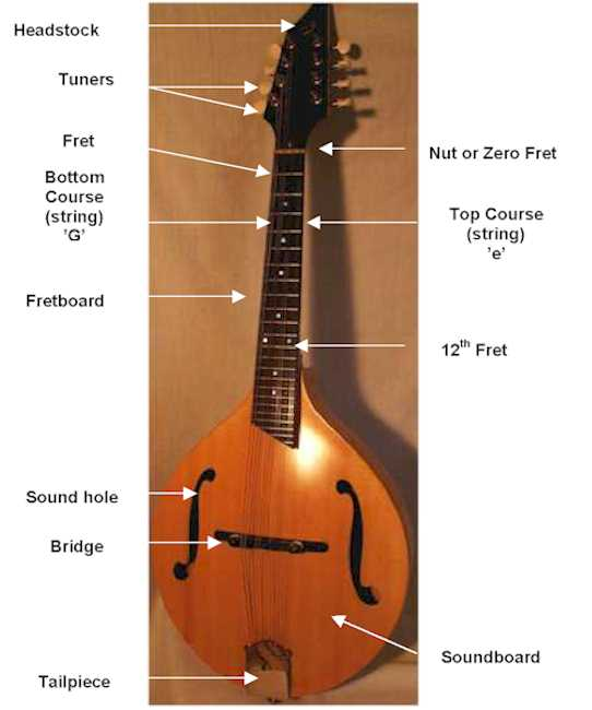 Anantomy of a Mandolin